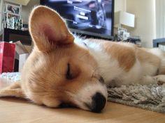 Power nap :)