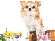 17 Herbal Remedies for Dogs Dog Safe Essential Oils, Can Dogs Eat Grapes, Every Dog Breed, Animal Nutrition, Pet Nutrition, Coconut Oil For Dogs, Oils For Dogs, Dog Behavior, Your Dog
