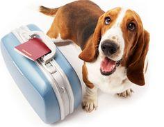 Noi partiamo, e il cane? Una mini guida alle vacanze estive con gli animali domestici!