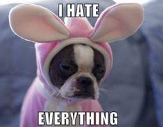 Boo Dog:)