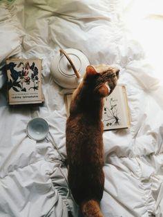 Pinterest// Jade Alexis