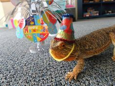 Angus is getting ready to celebrate his 4th birthday at Port Discover