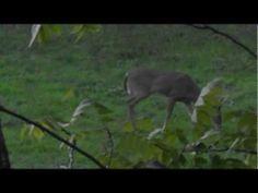 Early Season Bow Hunting Tip - http://huntingbows.co/early-season-bow-hunting-tip/