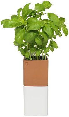 Cult design herb pot