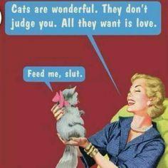 Cats are assholes #catsareassholes