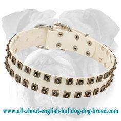 #White #Leather English Bulldog #Collar with Old Nickel #Studs  $59.90 #dog #englishbulldog #bulldogs #accessory #dogcollar #style