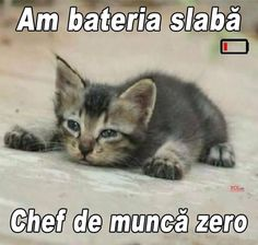 Every life matters. No one life is more important than the next. And everyone is only trying to find their way home. Funny Cat Memes, Haha Funny, Funny Cats, Funny Animals, Cute Animals, Funny Quotes, Love You Gif, Silly Cats, Animal Jokes