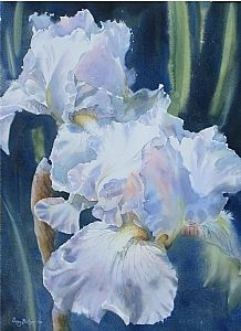 "White Iris Pair Giclee Print, 14 x 10"" by Poppy Balser  ~ 14"" x  10"""