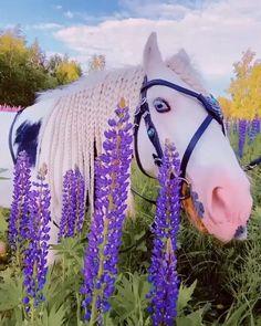 Funny Animal Videos, Cute Funny Animals, Cute Baby Animals, Nature Animals, Farm Animals, Animals And Pets, Nature Nature, Most Beautiful Horses, Pretty Horses