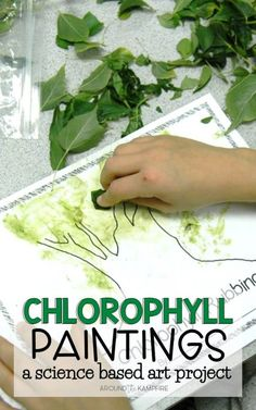 Chlorophyll paintings are a fun way to integrate art and science. Add this to your plant activities as your and grade students learn about photosynthesis and the life cycle of plants. lernen Chlorophyll Paintings: Incorporating Art in Science Nature Activities, Science Activities For Kids, Outdoor Activities For Preschoolers, Science Classroom, Science Education, Therapy Activities, Forest School Activities, Physical Education, Science Centers