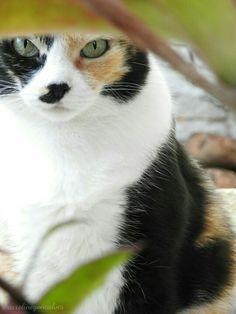 #my #cat #fat #cute #nice