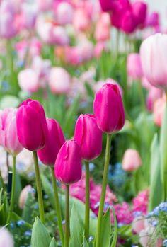 078dd1e76a5d 92 Best Pretty Petals images