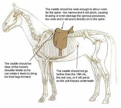 Saddle fitting anatomy