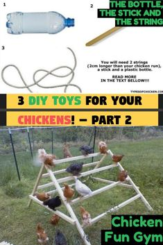 How to Keep Your Chickens Entertained & 3 DIY Toys! - Part 2 — Types of Chicken