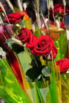 Diada de San Jordi  (Un llibre i una Rosa) - St. George's Day (a book and a rose)