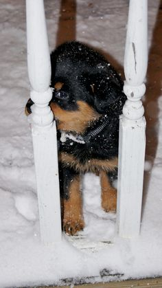 can u plz let me in its cold out here. Rot puppy