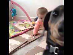 Silly dog is jealous of baby - YouTube