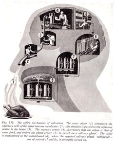 Fritz Kahn's Whimsical Infographics Turn People Into Contraptions Illustrations Médicales, Illustration Artists, Technical Illustrations, Pseudo Science, Science Art, Male Infertility, Fiction Movies, Vintage Medical, Information Graphics