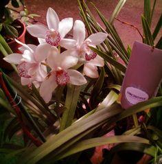 Orquideas #EdenGarden #vivero #gardencenter #DosHermanas