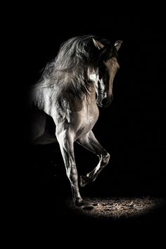 Horse in light and shadow...