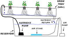 Simple Hydroponic Systems | Nutrient Film Technique)