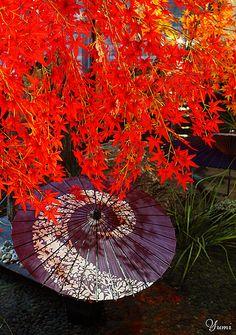 Autumn decoration, Japan - ©Yumi www.flickr.com/photos/bagdadcafe/1798680520/