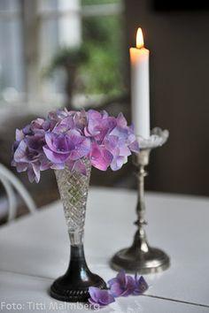 ana rosa Light Of The World, Light Of Life, Candels, Candle Lanterns, Vibeke Design, Shell Candles, Rosa Pink, Himmelblau, Rose Cottage