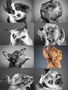 Dogfaces | Perfectly Timed Pictures