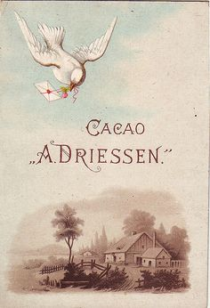 CACAO DRIESSEN DOVE WITH LETTER AND VIEW2 | patrick.marks | Flickr