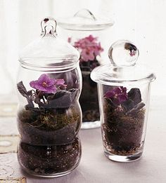 DIY- Miniature African Violets. See this project and more ideas for beautiful terrariums: http://www.midwestliving.com/garden/container/plant-beautiful-terrarium/