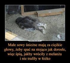 Funny Lyrics, Polish Memes, Weekend Humor, Some Quotes, Fun Facts, Haha, Cute Animals, Funny Memes, Entertaining