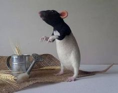 Needle felted Rat Collectible dolls Felt animal portrait Poseable realistic figurine Gifts for rat lover