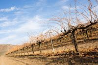 Vinos mexicanos y vinicolas de Mexico: El vino en México (El Economista)