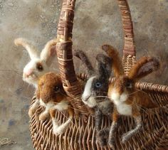 Cuties in a Basket