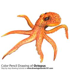 Octopus with Color Pencils [Time Lapse]