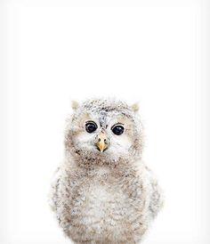 Hello! Baby Owl | Ben's Garden
