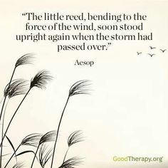 The little reed, bending to the force of the wind, soon stood upright again when the storm had passed over. -Aesop
