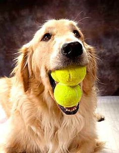 Adivina cuántas pelotas de tenis llevo.