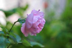 Daddy's neatness | Fashion Vintage Blogger  #tea set #daddysneatness #atelierdreamshabbychic #pashionvictim #doudoubracelets #shabbystyle #rose #flowers #garden  http://www.daddysneatness.com/2014/06/atelier-dream-shabby-chic.html