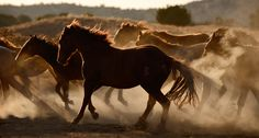 Tony Stromberg presents Equine Photography in Santa Fe, a photography workshop led by Tony Stromberg. (August 24 - 28, 2015)  Photography Workshops Directory | You're Gonna Want to Take More Pictures!
