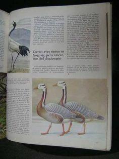 naturalia - ed. codex.