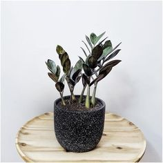 Innovation in agriculture and gardening creating indoor jungle in small spaces with sustainable and zero waste hydroponics systems. Jungle Warriors, Sansevieria Trifasciata, Ficus Elastica, Hydroponics System, Silver Dragon, Plant Decor, Agriculture, Indoor Plants, House Plants