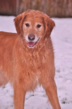 Homemade shampoo for dogs with dry skin      Ingredients;      2 Tablespoons Aloe Vera Gel    2 Cups Water    2 Teaspoons Liquid Castile Soap     1 Tablespoon Vegetable Oil
