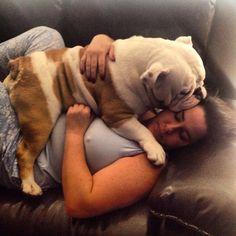 """Mami te Quiero Mucho!!!♥️✨ #relacionperfecta #dogoupic #petsatwork #bulldogs #momentos #mascotas #love #bulldogsmcbo"" Photo taken by @capo.bulldogvzla on Instagram, pinned via the InstaPin iOS App! http://www.instapinapp.com (03/18/2015)"