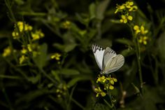 Butterfly by snapshotdatabase on 500px