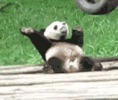 11 Cutest Animal GIFs EVER. #9 is my favorite. - Mogul