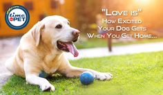 """""""Quote of the day"""" #timeforpet #dogs #dog #doglove #doglovers #animallovers #animals #animallove #quotes #animalquotes #quoteoftheday #petcare #petlove #pet #pets #bangalore #monday"""