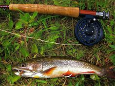 """Salvelinus fontinalis...my favorite trout...and what a beautiful way to say """"brook trout""""..."""