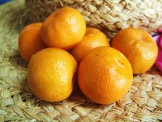 CALAMONDIN Orange Dwarf Citrus Patio *Healthy* Seedling Tree