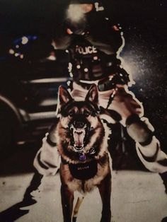 Goal is to be a K-9 unit officer